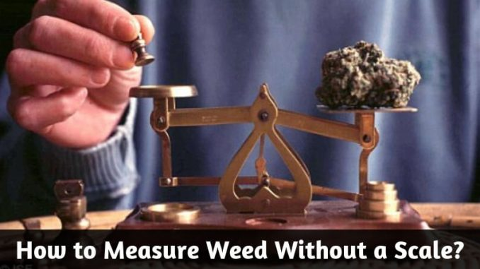How To Measure Weed Without A Scale Find Different Ways
