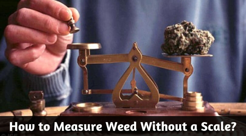 How to Weigh Weed Without a Scale_